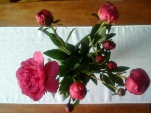 Veckans blommor den sista veckan i maj blev ljuvliga försommarpioner